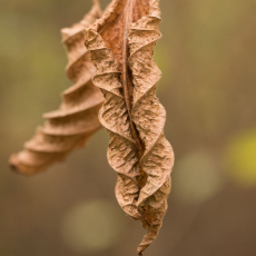 Verdord blad