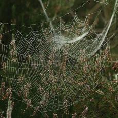 Spinneweb-in de vroege ochtend