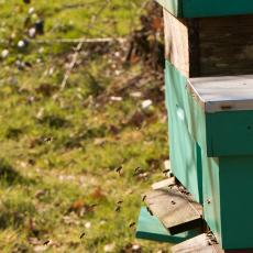 De eerste bijen zijn al actief