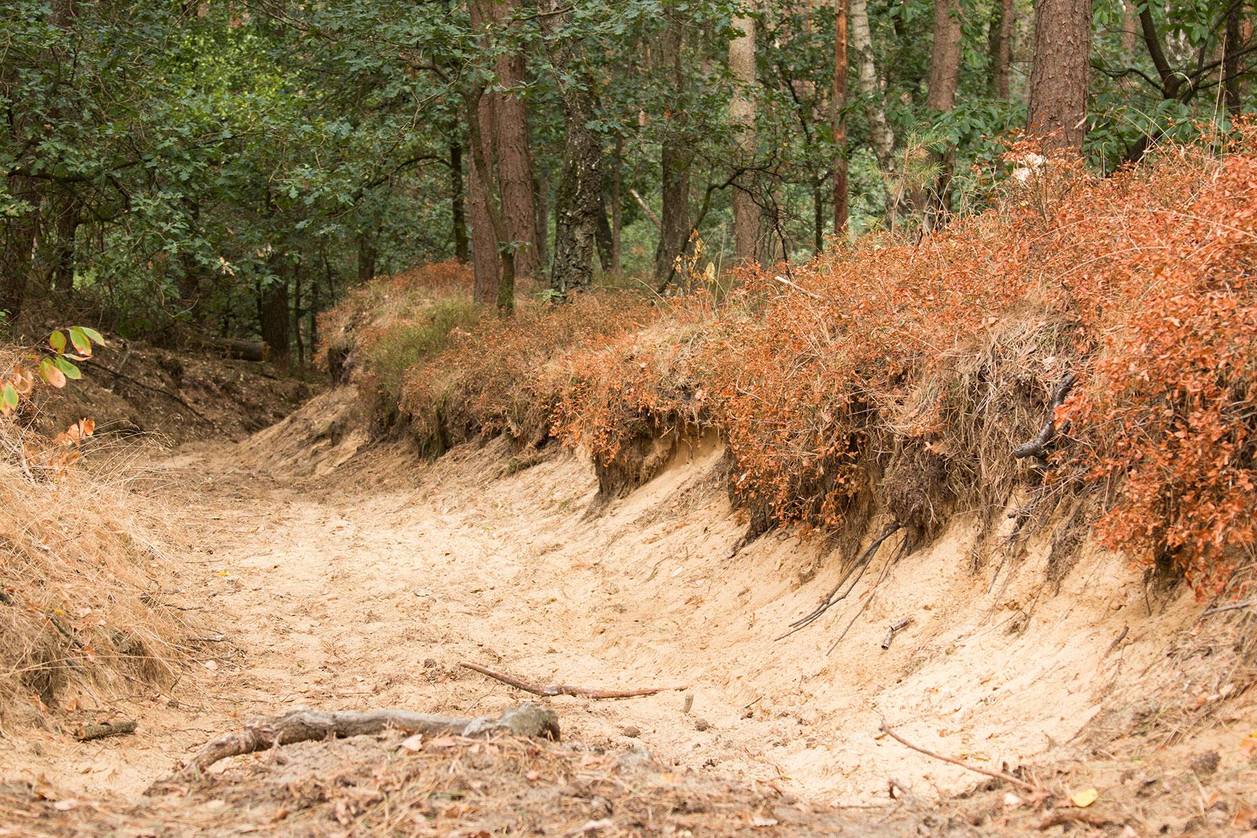 Dekzand bij De Zwarte Bulten in het Rozendaalse Bos