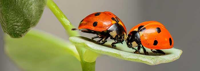 Insecten-ongewervelden (invertebraten)