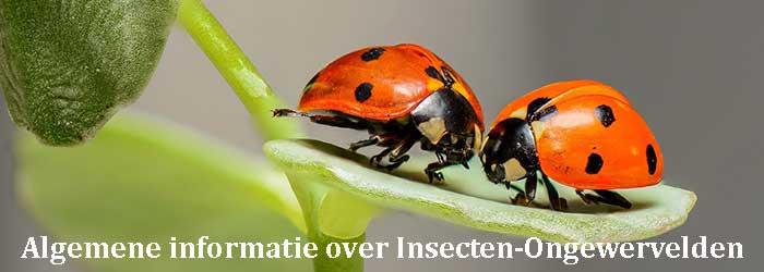 Algemen informatie over insecten-ongewervelden