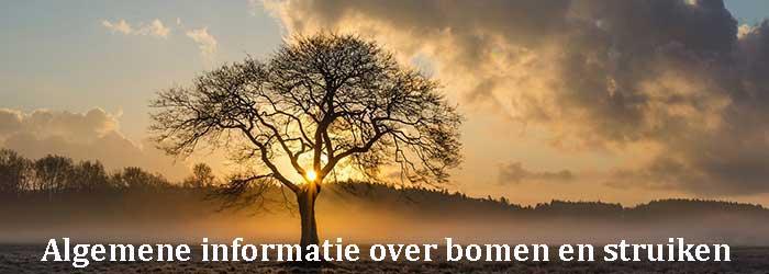 Algemene informatie over bomen en struiken