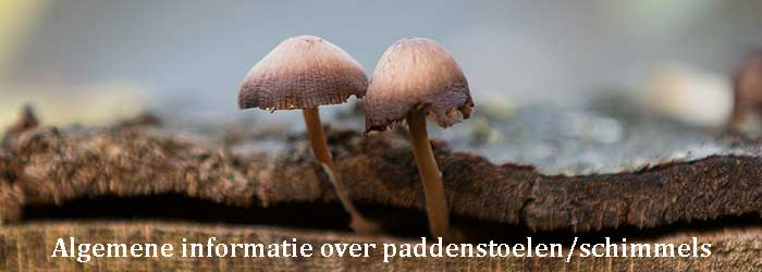 Algemene informatie over paddenstoelen en schimmels