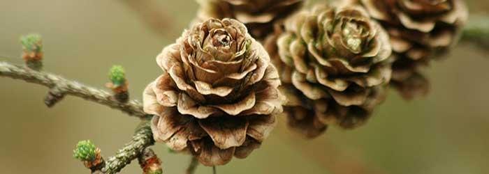 Flora van de Veluwezoom