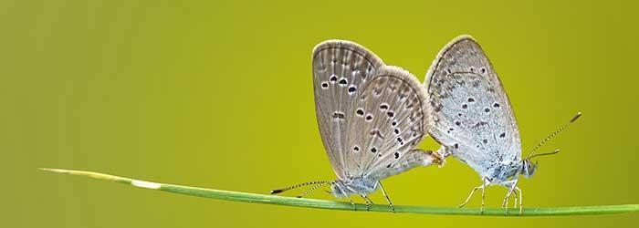 Inecten (Insecta)