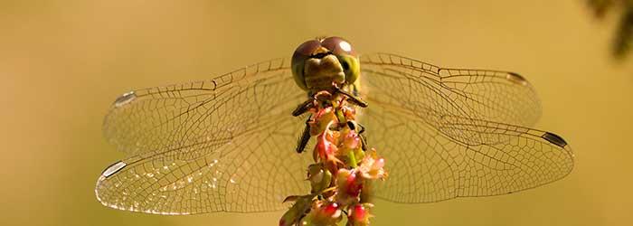 Ongewervelden van de Veluwezoom, insecten