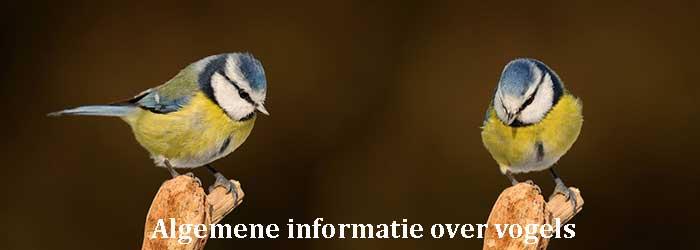 Algemene informatie over vogels