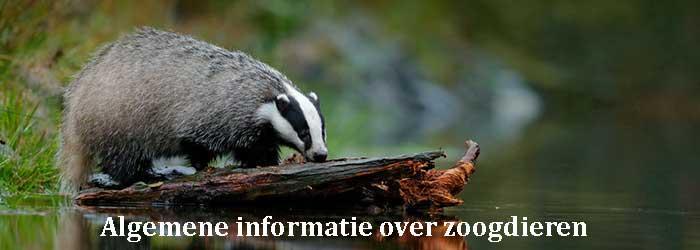Algemene informatie over zoogdieren