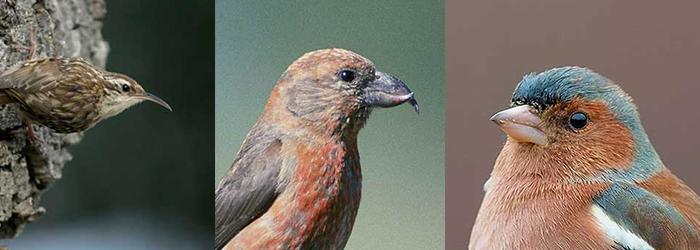 snavels van vogels