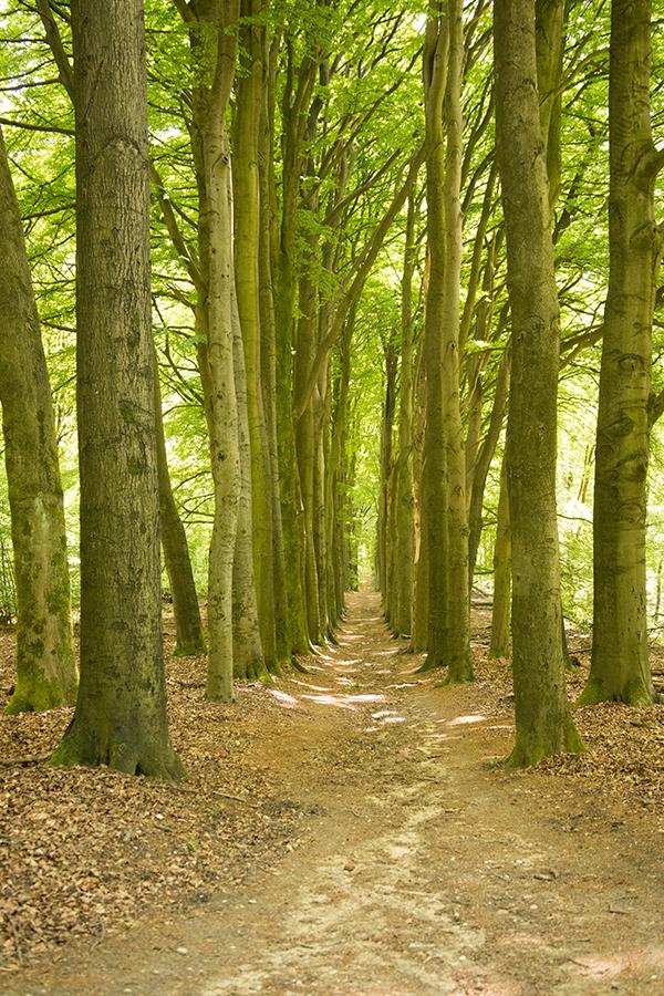 Pad Rozendaalse bos vanaf en naar kasteel Rozendaal