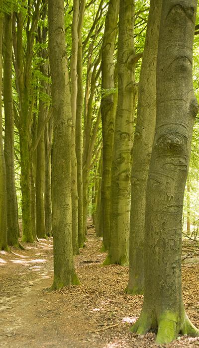 Pad Rozendaalse bos dat leidt naar kasteel Rozendaal