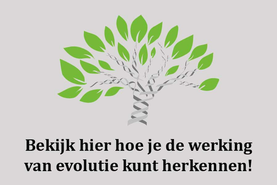 Wat is evolutie en hoe werkt het