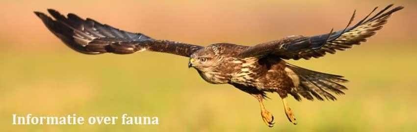 Informatie over fauna
