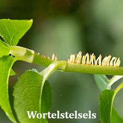 wortelstelsels bij planten