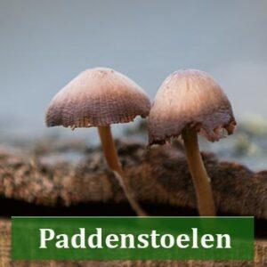 paddenstoelen en schimmels