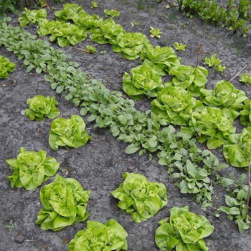 zelf groenten verbouwen