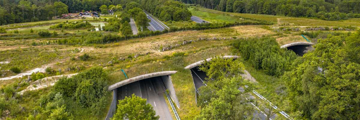 Ecoducten zorgen voor migratie, van vooral de fauna, tussen natuurgebieden.