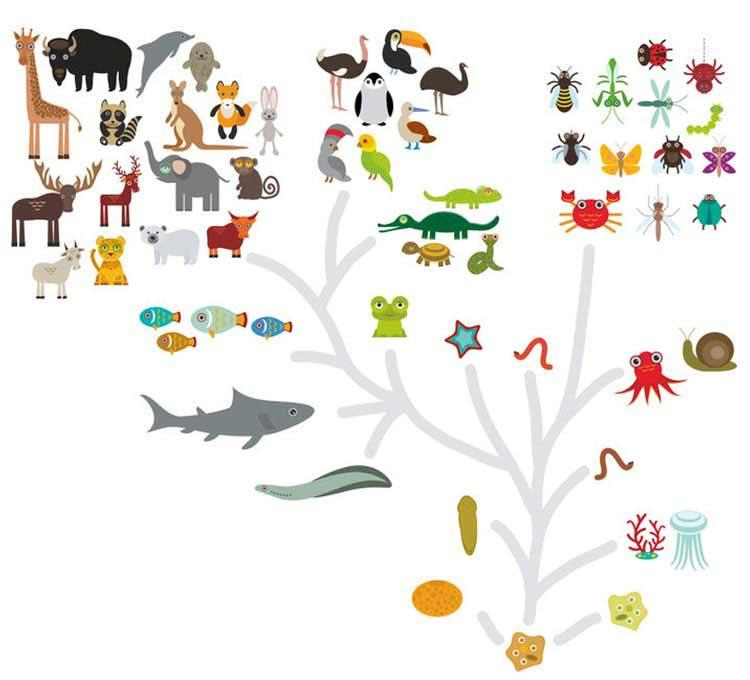 eenvoudige weergave van evolutionaire levensboom.