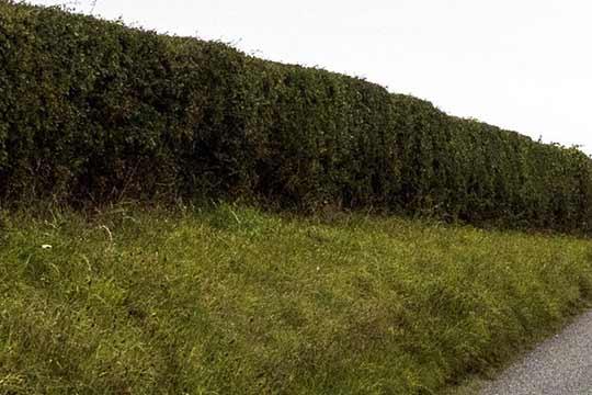 Heggen bieden schuilplekken voor zoogdieren en nestgelegenheid voor vogels