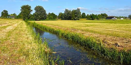 Slootwater is vaak vervuild door de mest uit de aanliggende percelen.