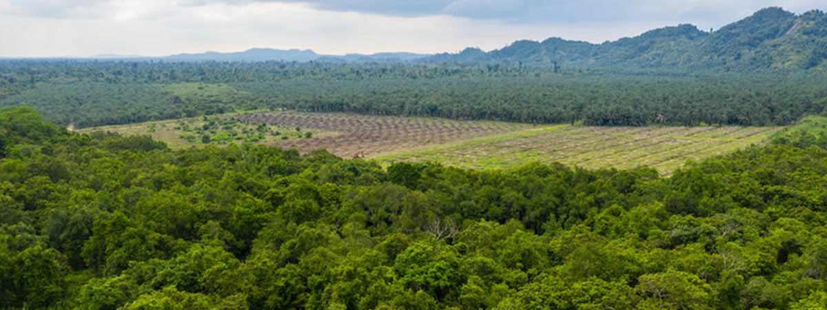 Grote delen van de aarde worden ontbost vanwege de productie van soja en palmolie.