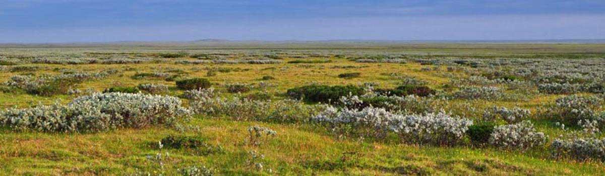 Toendra achtige omgeving, 12.000 jaar geleden Ongeveer 12.000 geleden had Nederland een toendra-achtig landschap.