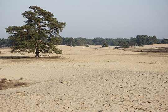 Door de ontbossingen raakte een groot deel van Hoog Nederland bedekt met zandverstuivingen.