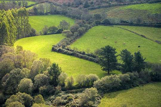 Speelse percelen met veel landschapselementen die goed zijn voor de biodiversiteit.