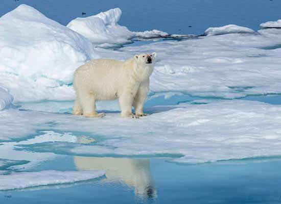 Het smeltende ijs op de polen zorgt voor minder leefgebied, extra opwarming en stijgend water.