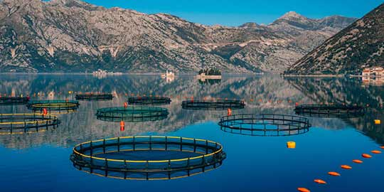 Verantwoorde viskweek kan een bijdrage leveren om de biodiversiteit te beschermen.