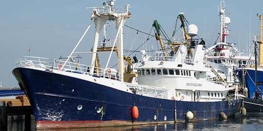 Moderne vissersschepen kunnen veel meer vis vangen dan in het verleden.