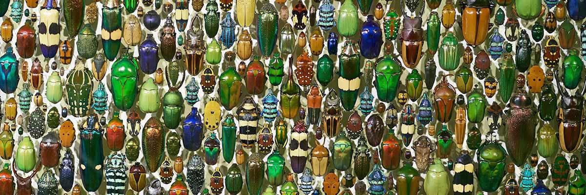 Kevers zijn de grootstede orde binnen de klasse van insecten. Wereldwijd zijn er ongeveer 350.000 soorten beschreven. Het overgrote deel van het aantal keversoorten is echter nog niet ontdekt.